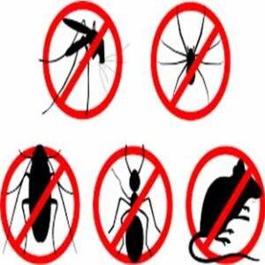 افضل شركة مكافحة حشرات بالمدينة المنورة , افضل شركة رش حشرات بالمدينة المنورة , شركات مكافحة الحشرات بالمدينة المنورة , شركات رش المبيدات بالمدينة المنورة