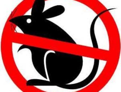 خدمة مكافحة الفئران بمكة المكرمة