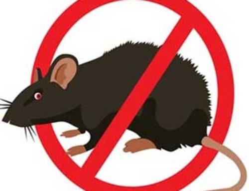خدمة مكافحة الفئران بجدة
