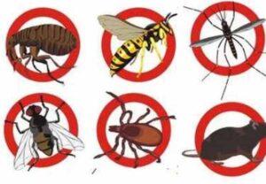 طرق الوقاية من الحشرات